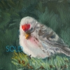 ©ML Marg Smith- Rudy-Redpoll