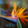 marg-smith-delightful-oil-14x18-framed-sold