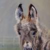 ©ML Marg Smith - Donny the Donkey